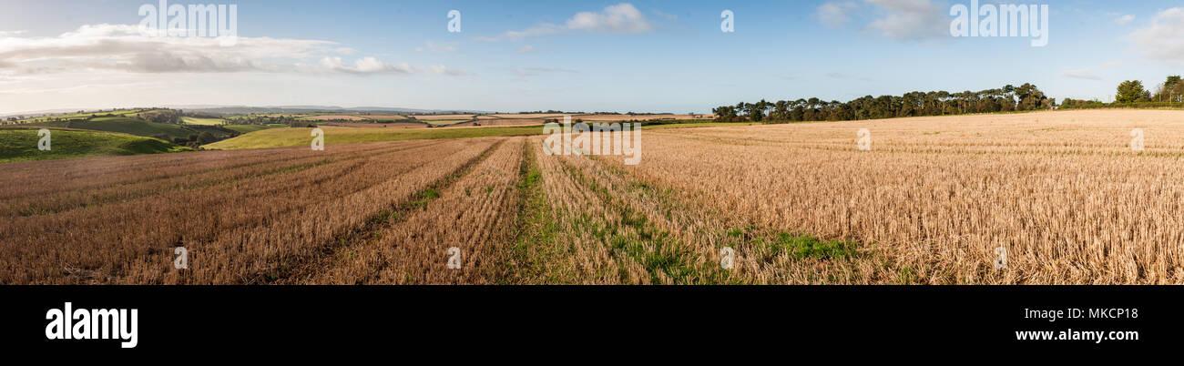 A field of wheat stubble is left after the harvest on Seven Wells Down, the source of the River Yeo in Somerset, England. - Stock Image