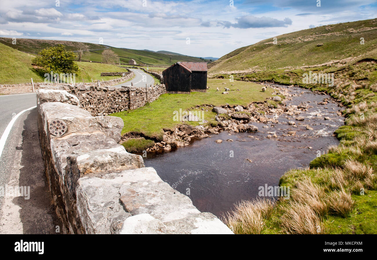 Sheep graze in the Grains o' th' Beck Meadows, beside the River Lune in the Teesdale district of Country Durham, under the hills of England's North Pe - Stock Image