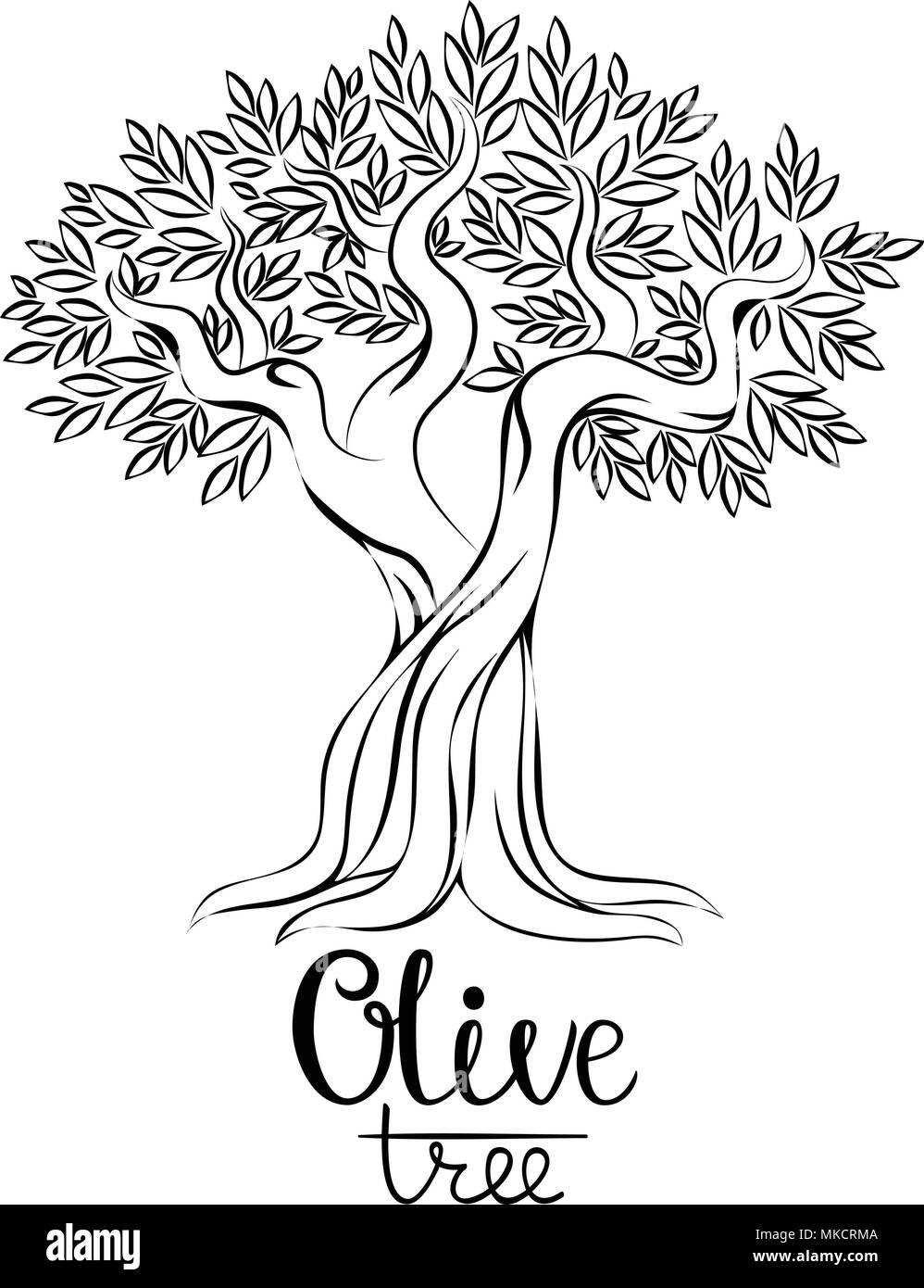 olive tree vector illustration olive oil vector olive