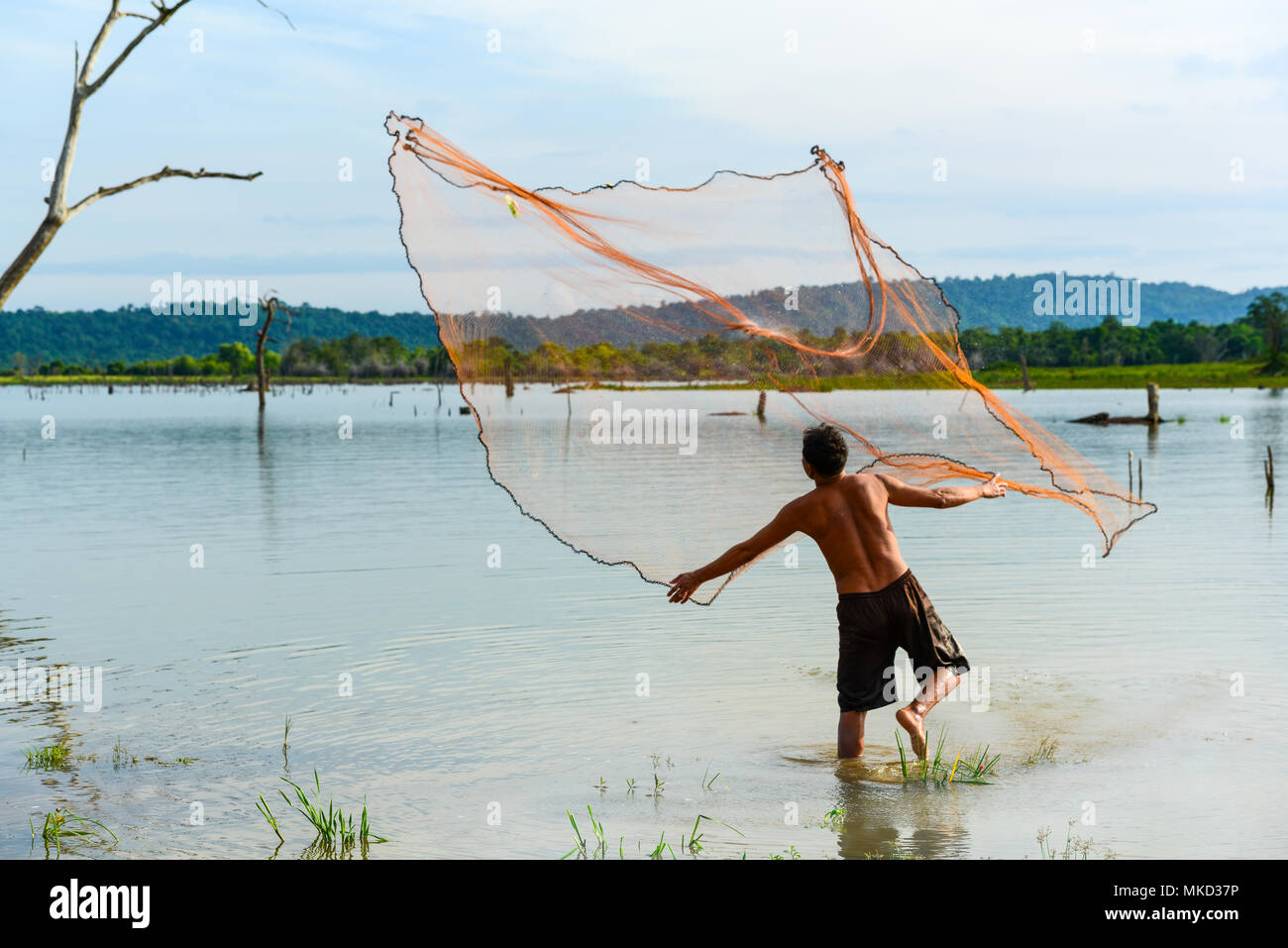 Chachoengsao, Thailand - December 8, 2011, Fisherman  casting traditional fishing net to fish in rural swamp in Chachoengsao, Thailand - Stock Image