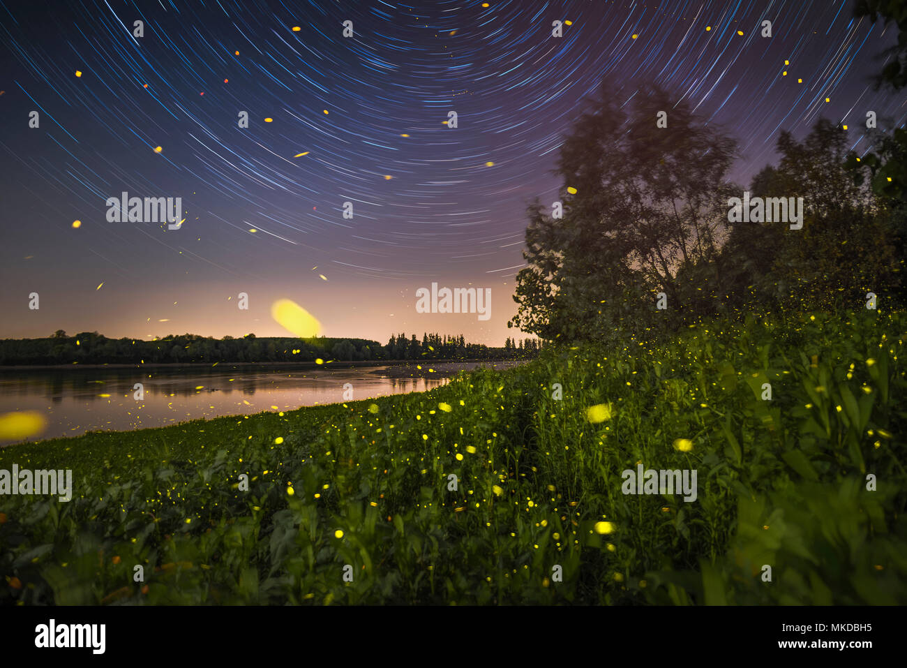 Night among star and fireflies, side of the Po river in the north of Italy - Stock Image