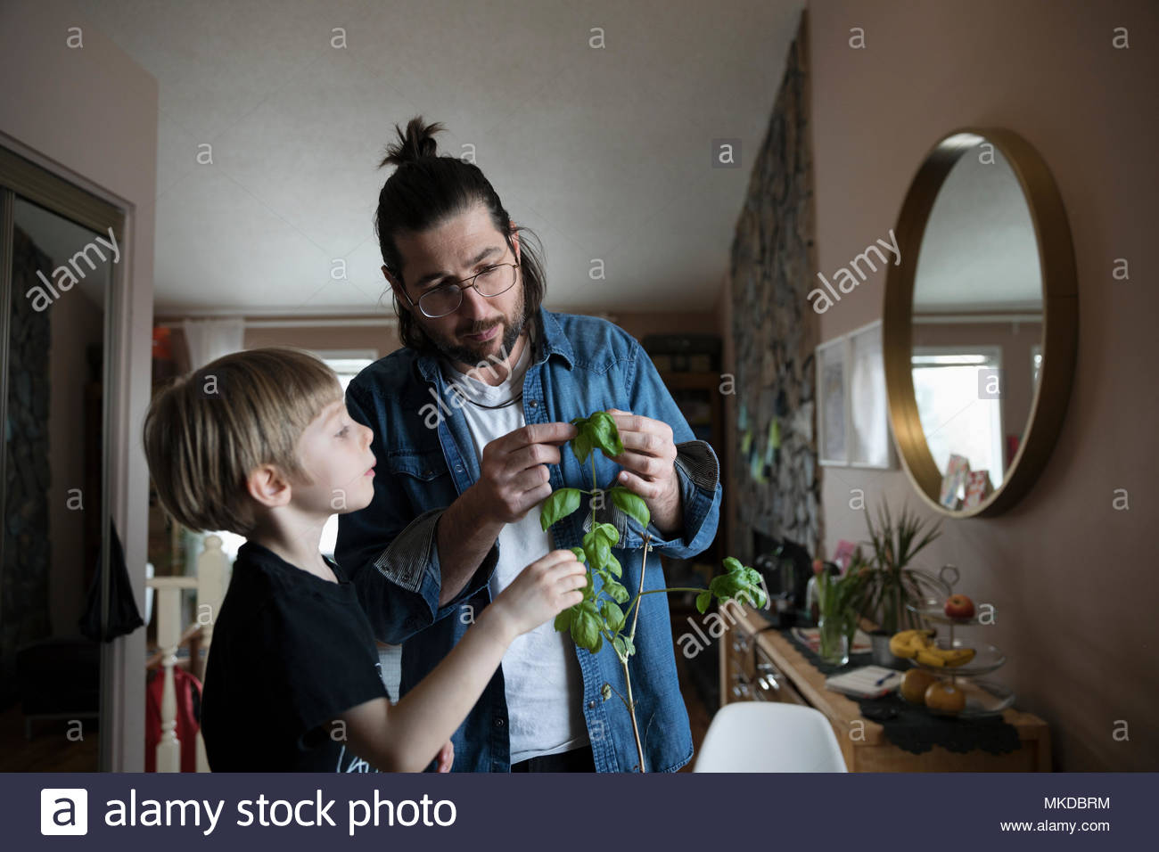Father and son picking basil from plant - Stock Image