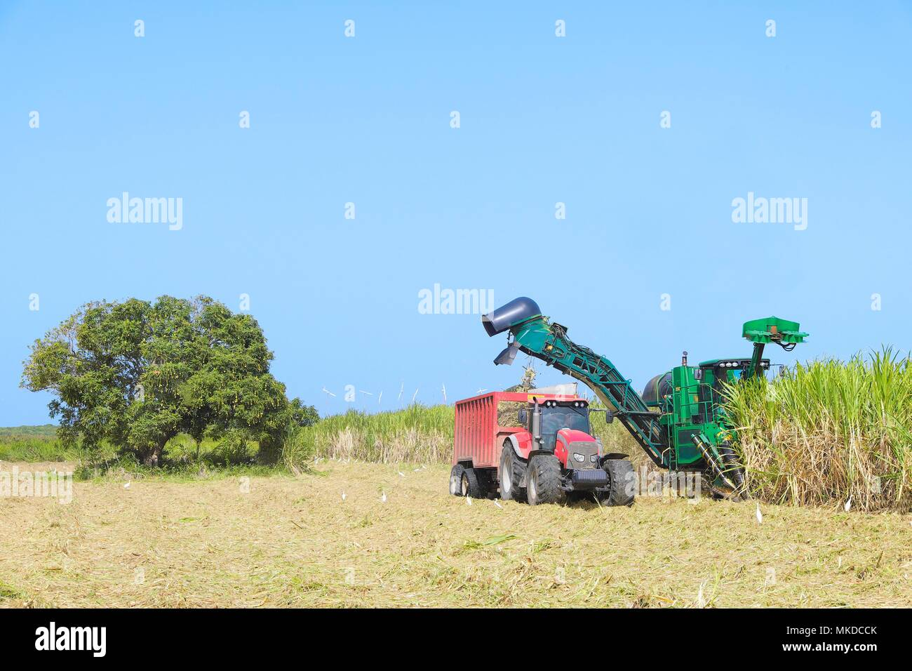 Guadeloupe sugar cane fields stock photos guadeloupe sugar cane fields stock images alamy - Pole emploi port louis guadeloupe ...