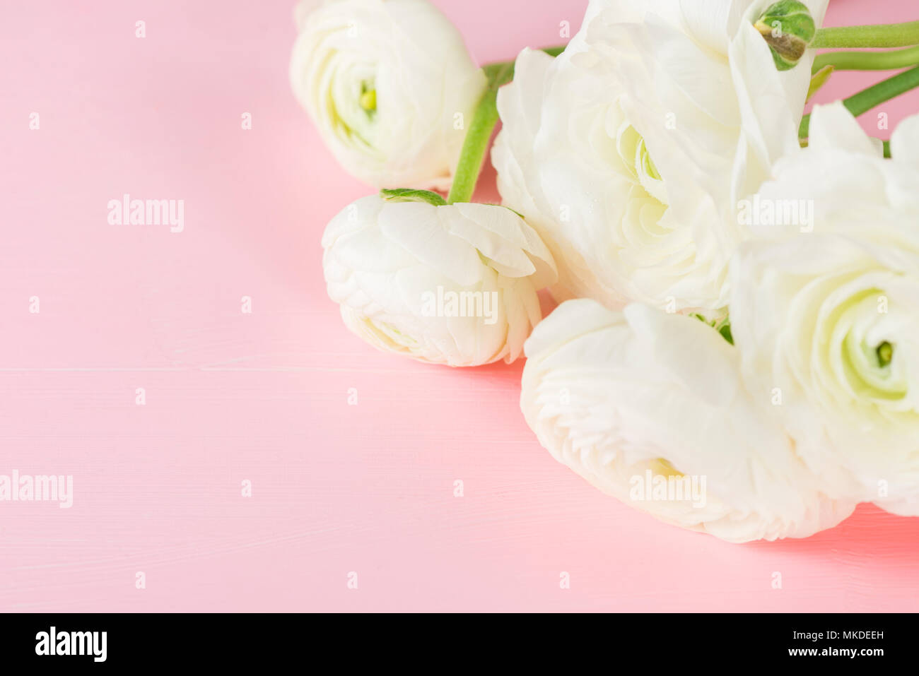Close Up Of Bunch Of White Ranunculus Buttercup Flowers Spring Or