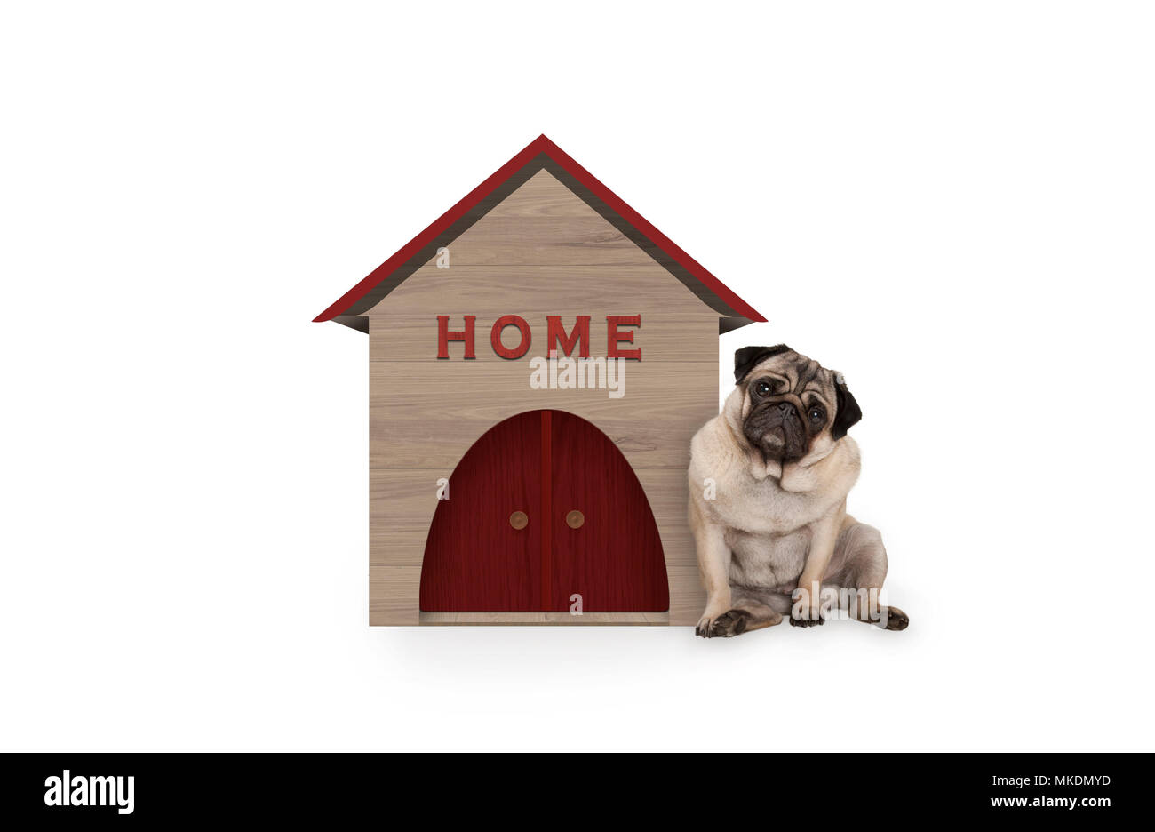 cheeky pug puppy dog sitting down next to dog house with sign Home, isolated on white background Stock Photo