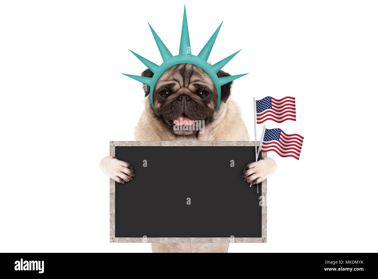 smiling pug puppy dog holding up American flag and blank blackboard sign, wearing lady Liberty crown, isolated on white Stock Photo
