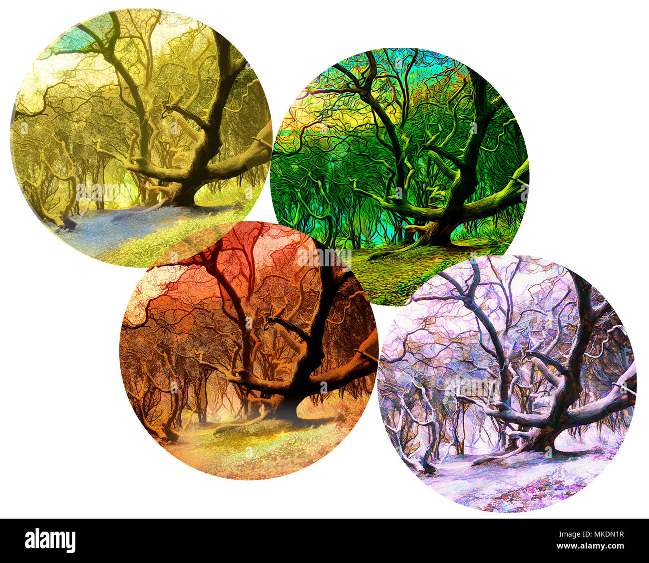 FOUR SEASONS CONCEPT: Magic of the Forest - Stock Image