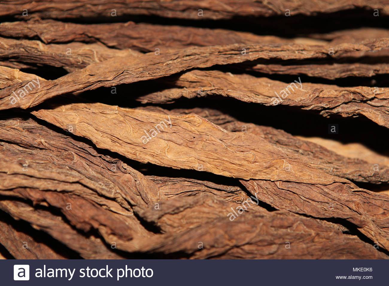 Dried tobacco leaves at the LaFlor Dominicana Cigar Factory in the Dominican Republic. - Stock Image