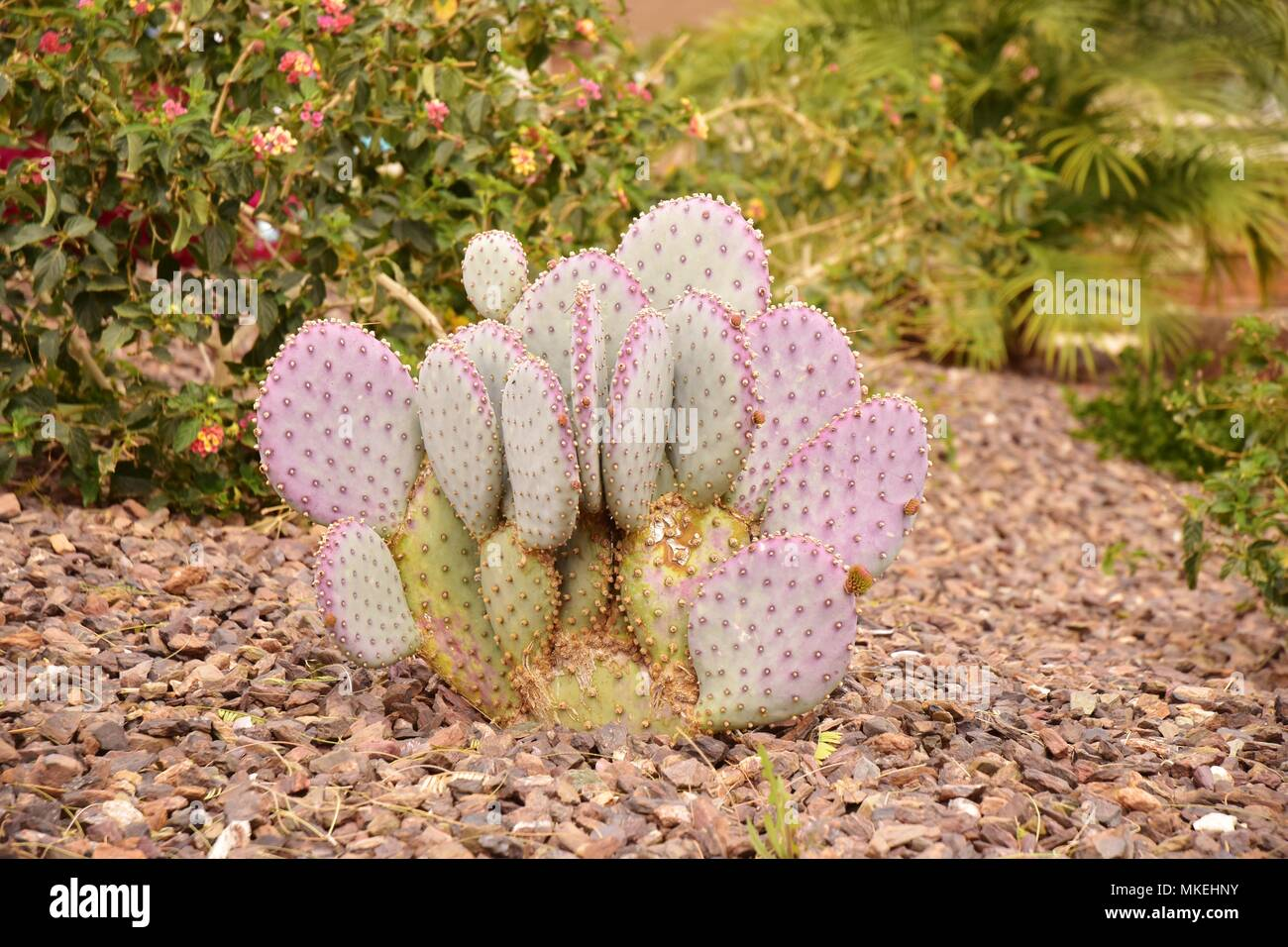 Some of the many unusual plants found in the Arizona desert. We were in Queen Creek, southeast of Phoenix. Taken at 1:00 PM. Stock Photo