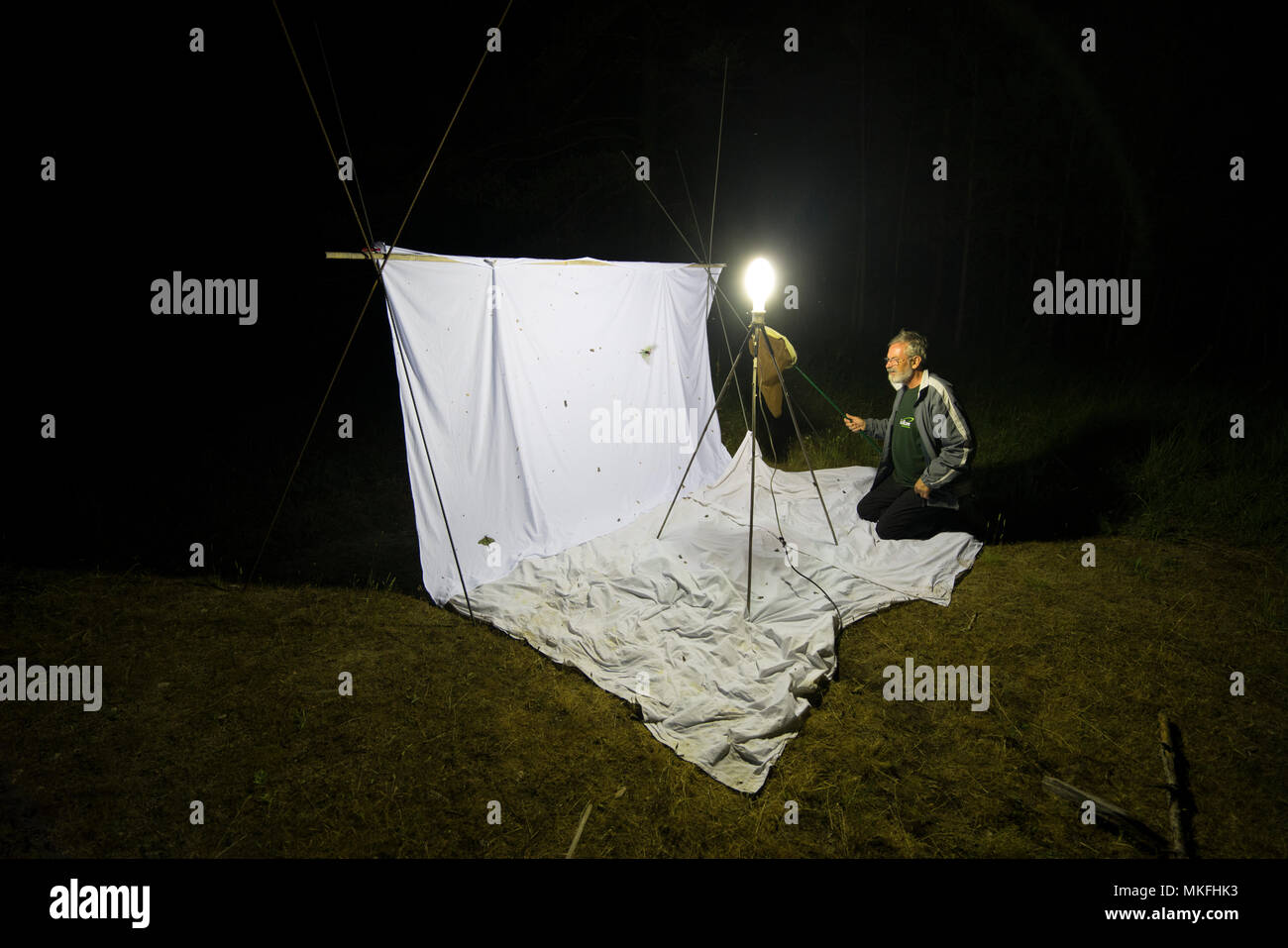 Spanish moon moth (Graellsia isabellae) catching on Insect trap at night, The Ports Natural Park, Terres de L'Ebre, Tarragona, Catalonia, Spain, Europe Stock Photo