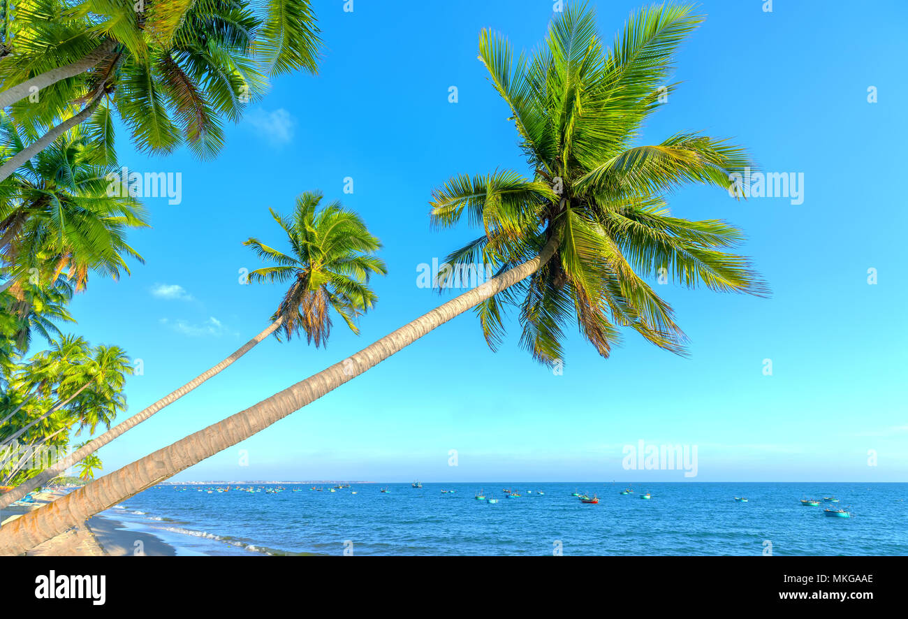 Inclined coconut trees leaning toward the tropical beach on summer afternoon, below are a beautiful boat mooring - Stock Image