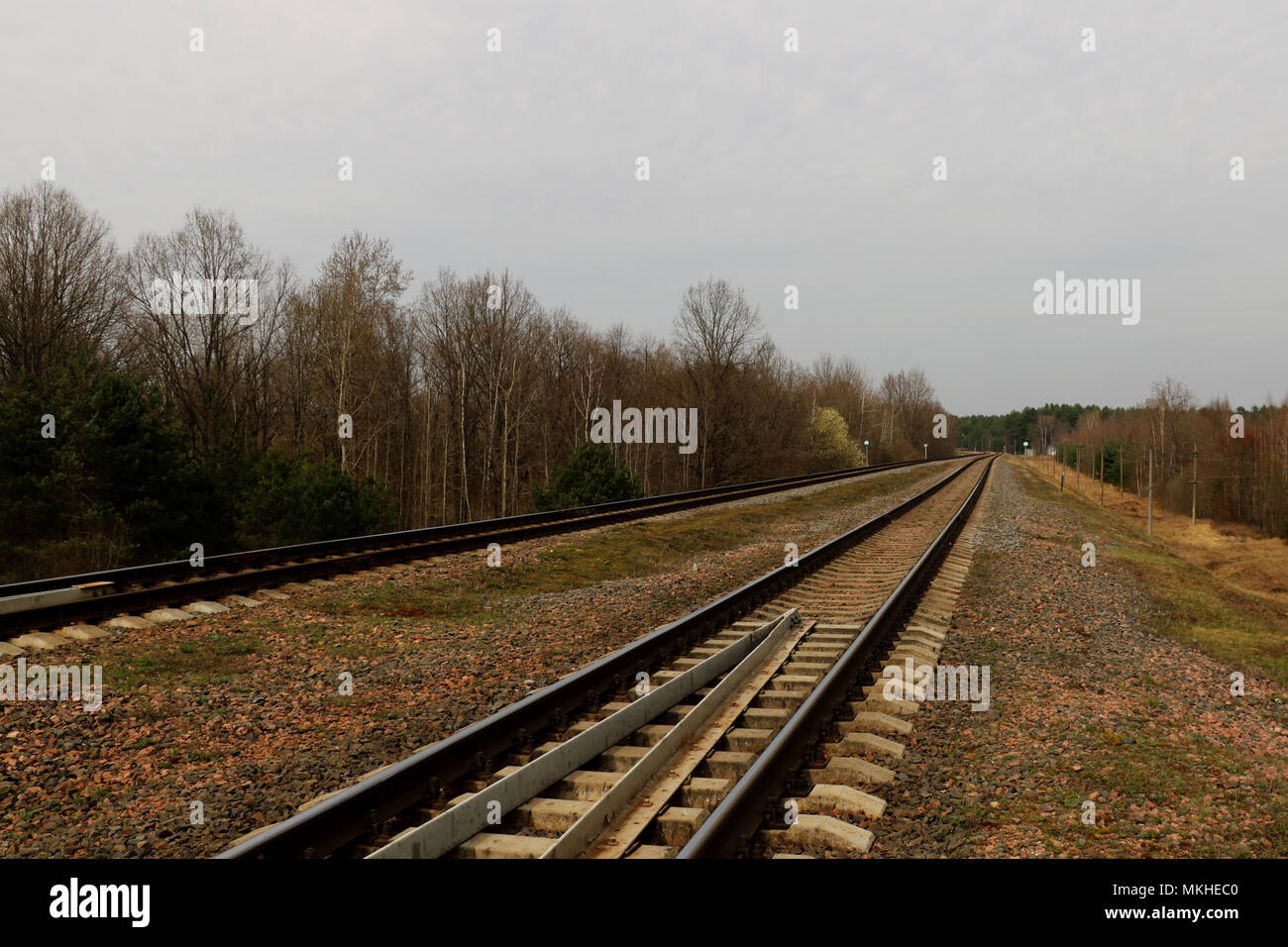 A railway along which trees grow with small clouds. Background - Stock Image