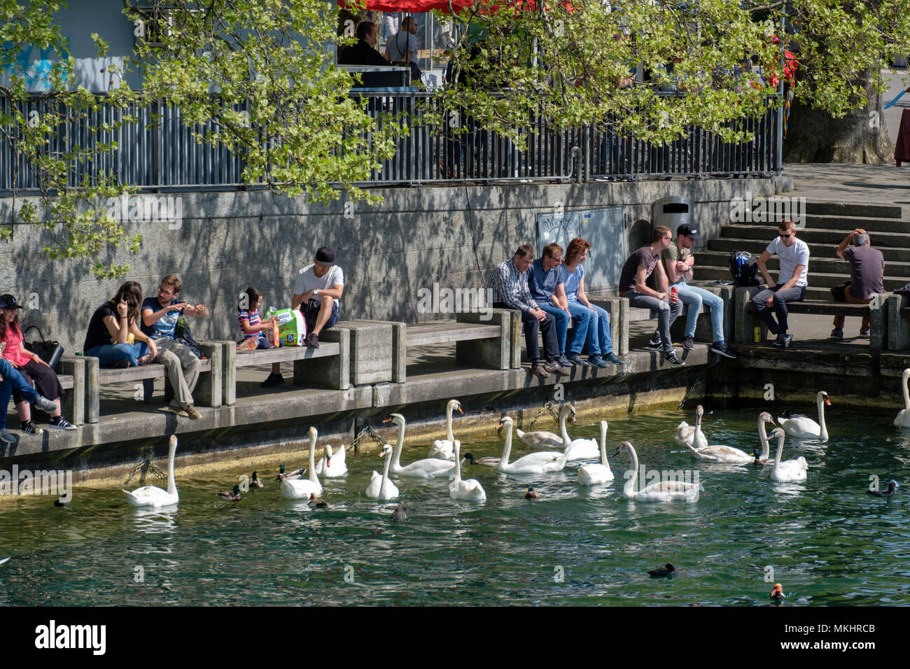 People enjoying the sun and feeding the swans on the shores of the lake in Zürich, Switzerland, Europe - Stock Image
