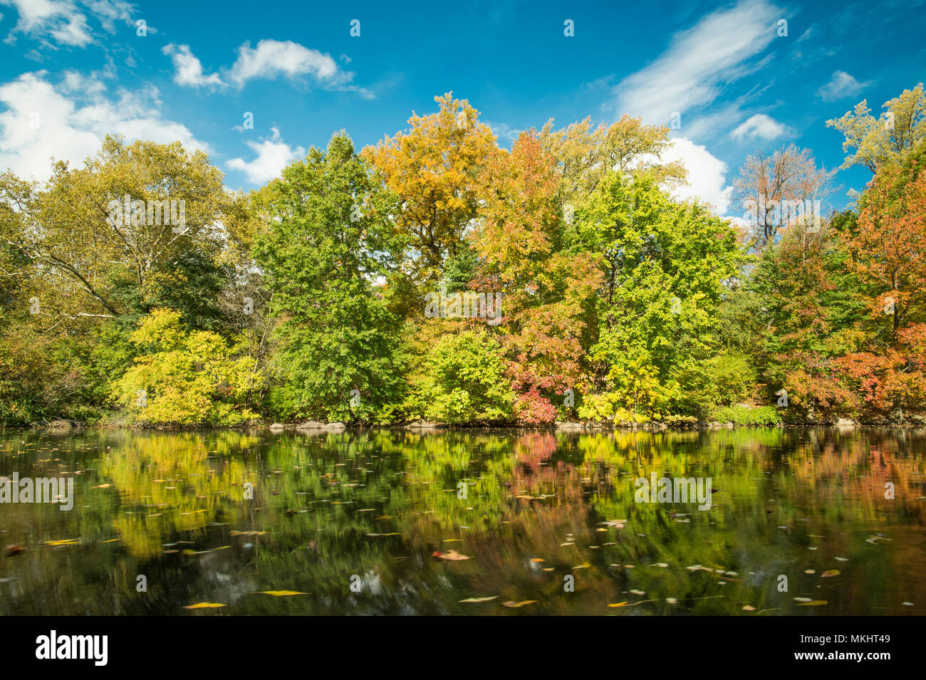 Beautiful panorama of some colorful trees in Central Park with blue ...