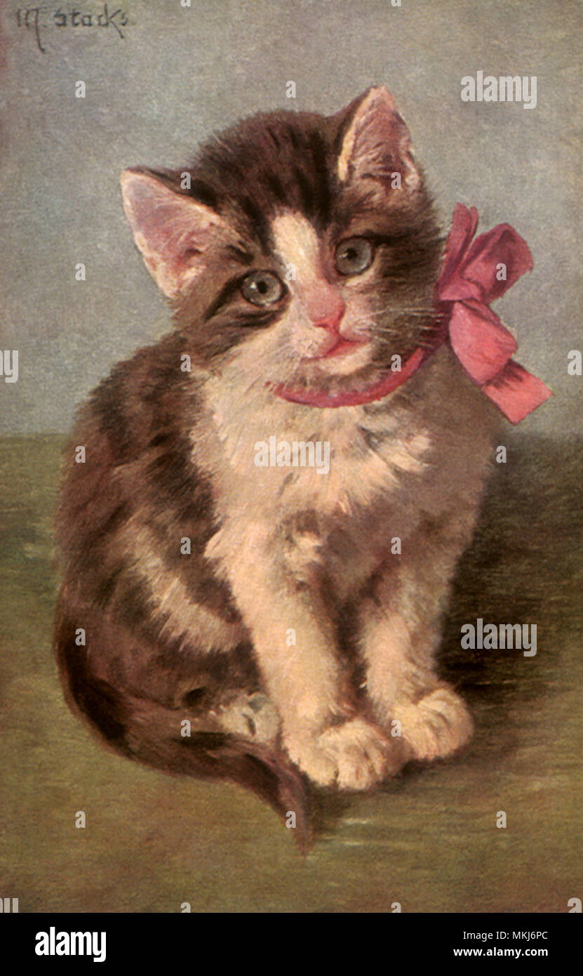 Pink Bowed Kitten - Stock Image