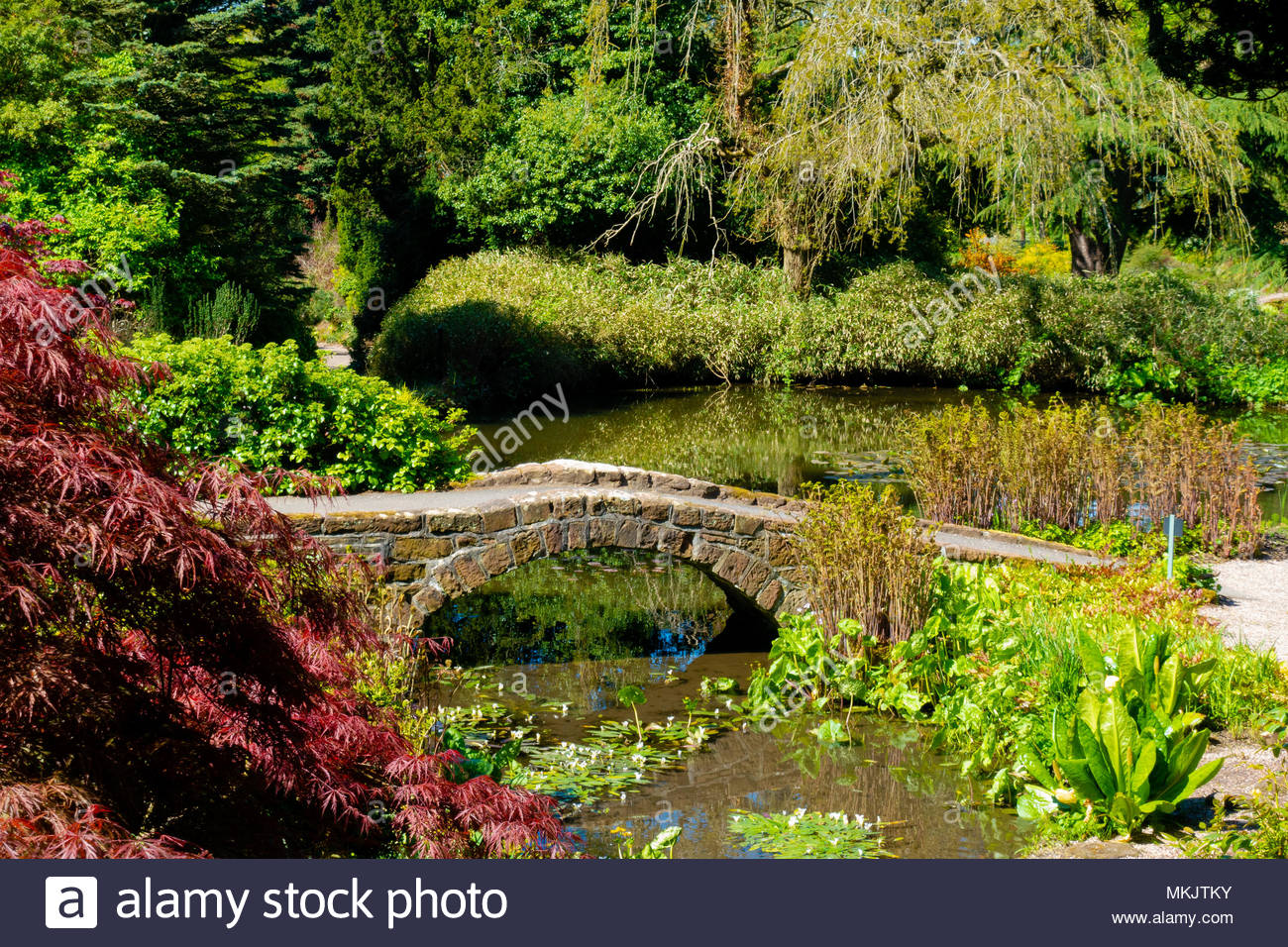 Landscapes & Scenery at The University of Liverpool's Ness Botanical  Gardens, Ness Gardens, Ness, Wirral, Merseyside England UK Credit: Christopher Canty Photography/Alamy Live News Stock Photo