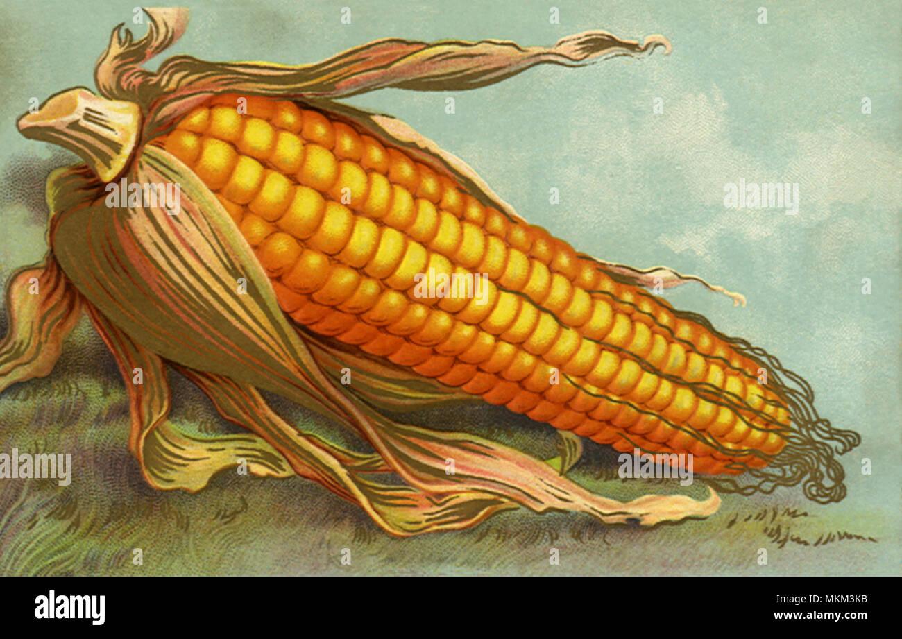 Corny Thanksgiving - Stock Image