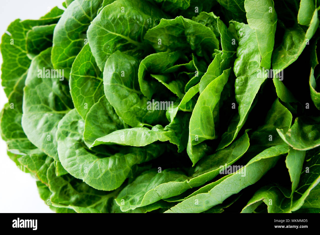 Fresh Green Lettuce. Healthy food. Rich in vitamins and minerals. - Stock Image