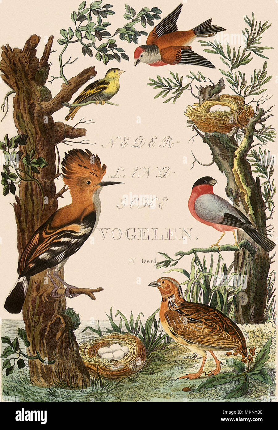 Frontispiece with Assorted  Birds - Stock Image