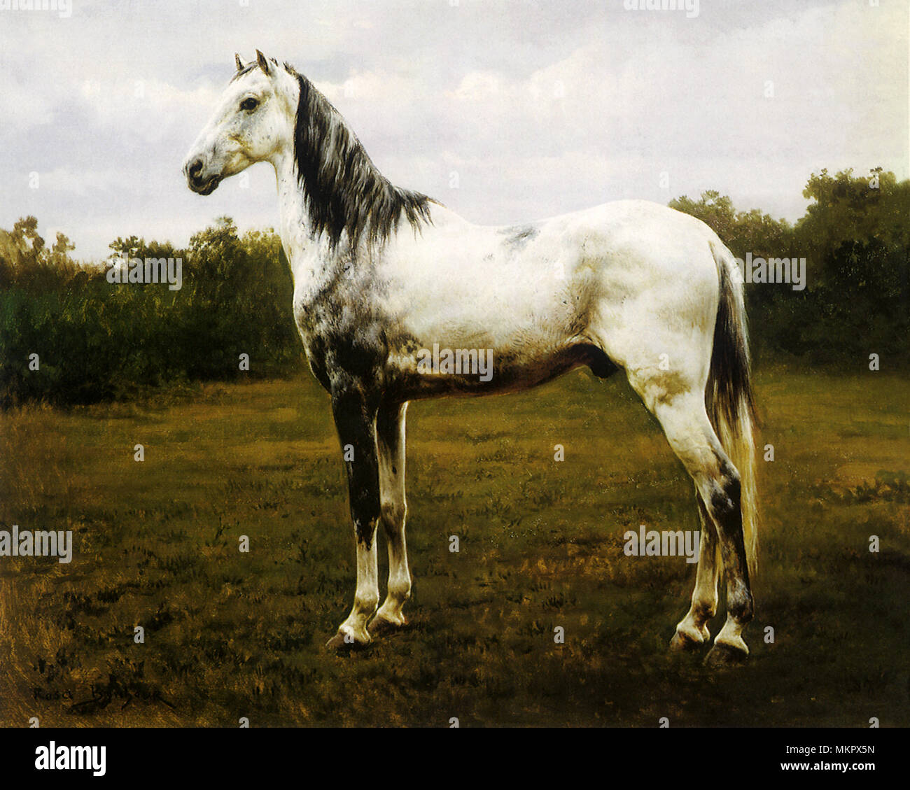Gray Tinted Horse - Stock Image
