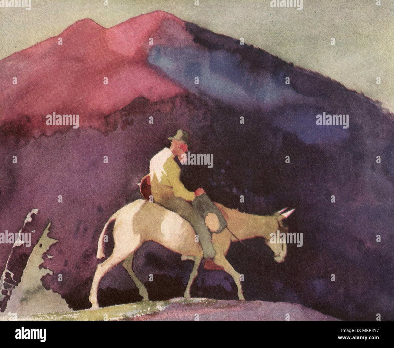 Old Prospector On Mule Stock Photo 184290155 Alamy