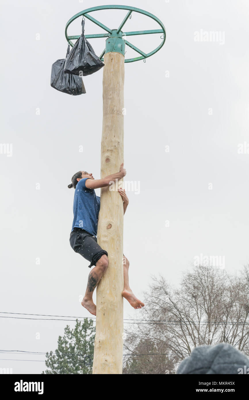 TIRASPOL, MOLDOVA - FEBRUARY 18, 2018: Young man climbing on a wooden pole for the prize. Slavonic folk pagan holiday Maslenitsa (Shrovetide) - a symb - Stock Image