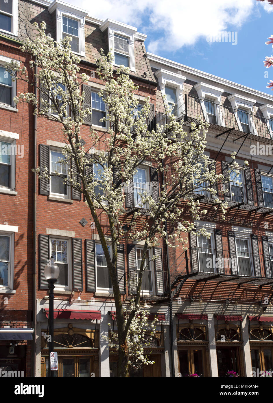 Early Spring Blooms Against Historic Architecture In The North End Of Boston Massachusetts Usa Stock Photo Alamy