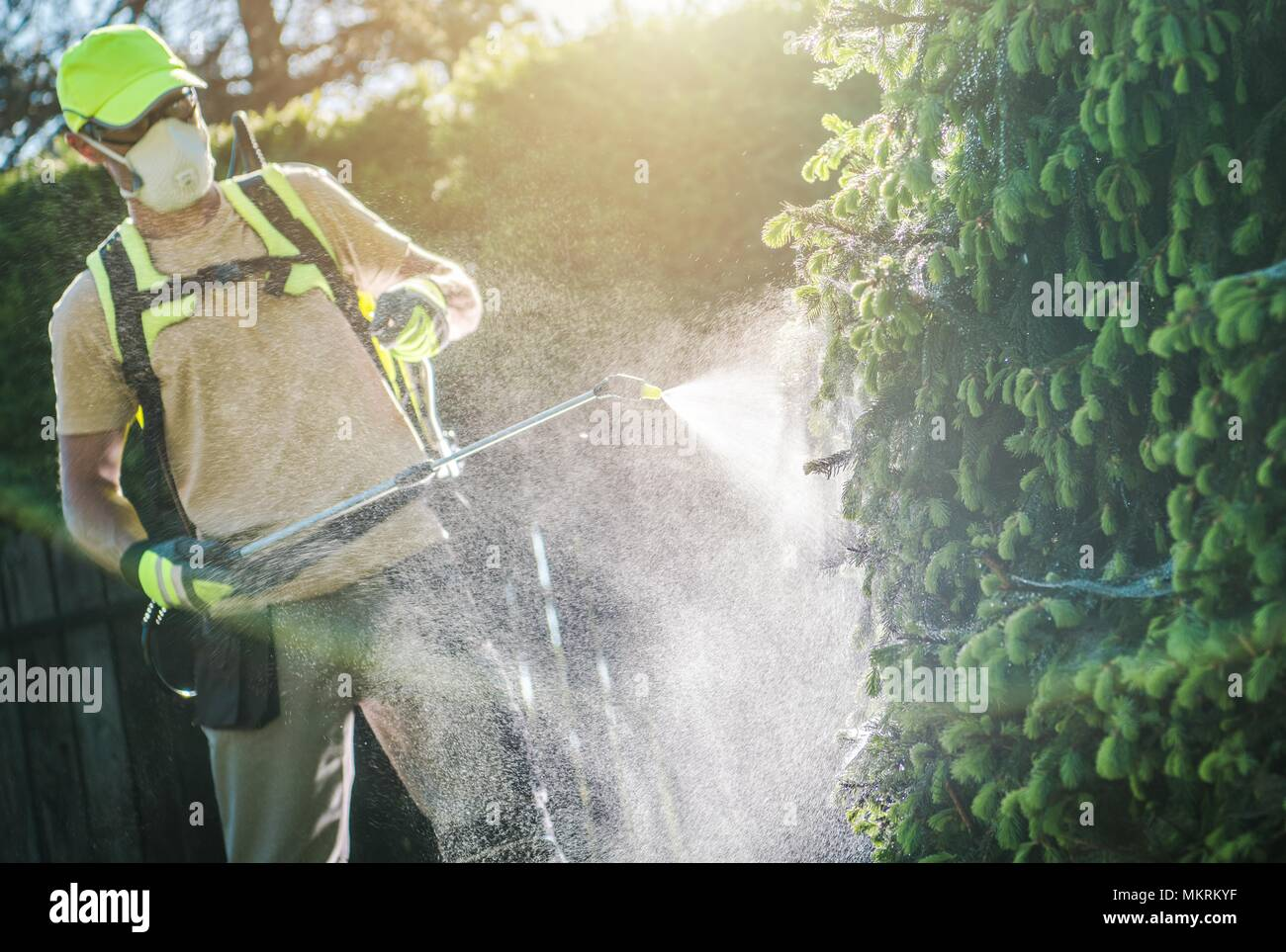 Pesticide Garden Plants Spraying with Professional Equipment by Caucasian Gardener in His 30s - Stock Image