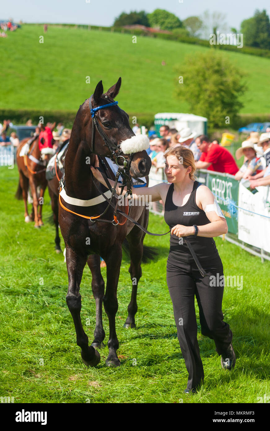 Horses and jockeys being walked around the parade ring Eyton on Severn Point to Point 7th May 2018 - Stock Image