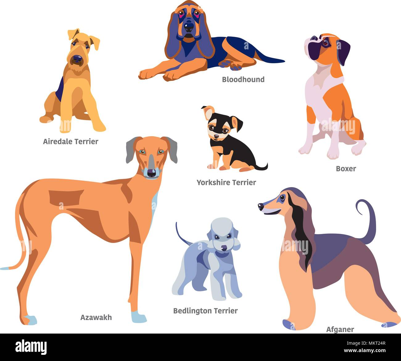 Vector illustration of dogs breed Airedale Terrier ...