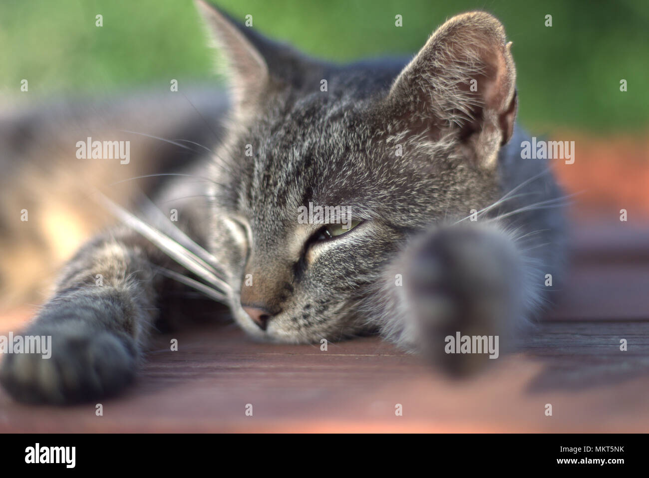 Our cat,  name is Simon - Stock Image