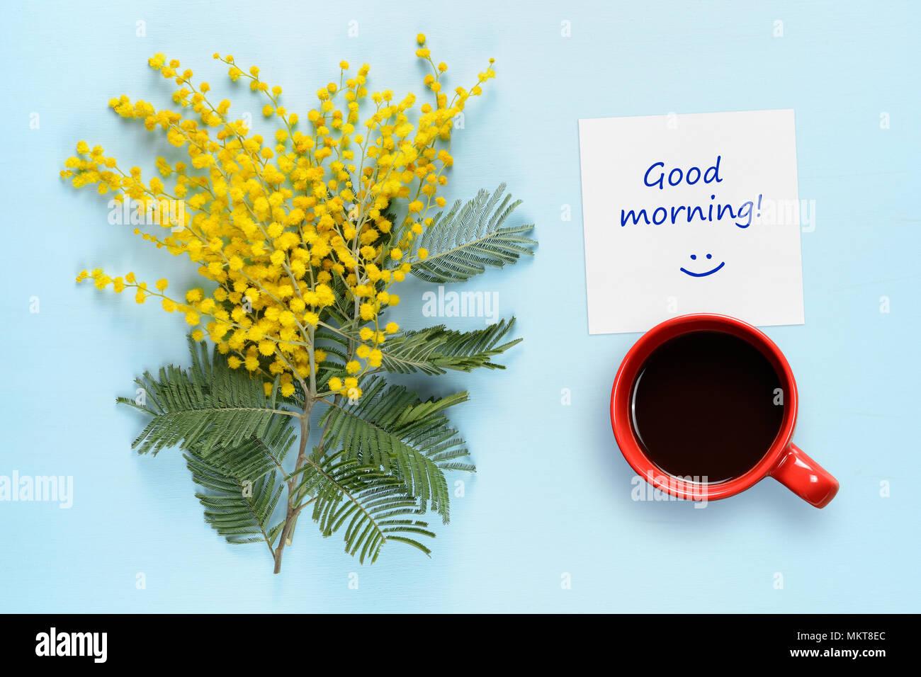 Waking Herbs Mimosa