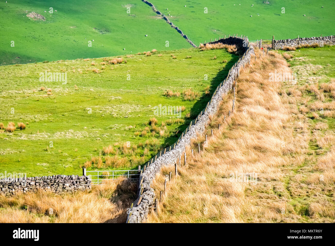 Rough upland pasture and drystone walls, Peak District, Derbyshire - Stock Image