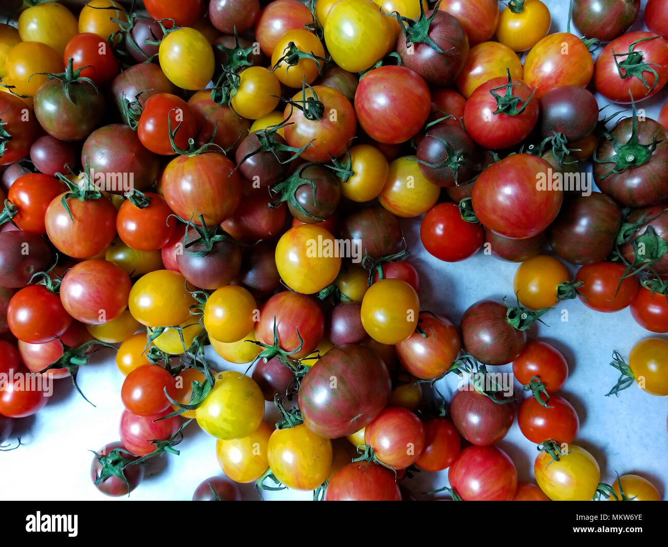 A rainbow of tiny tomatoes make for delicious salads and yummy photographs - Stock Image
