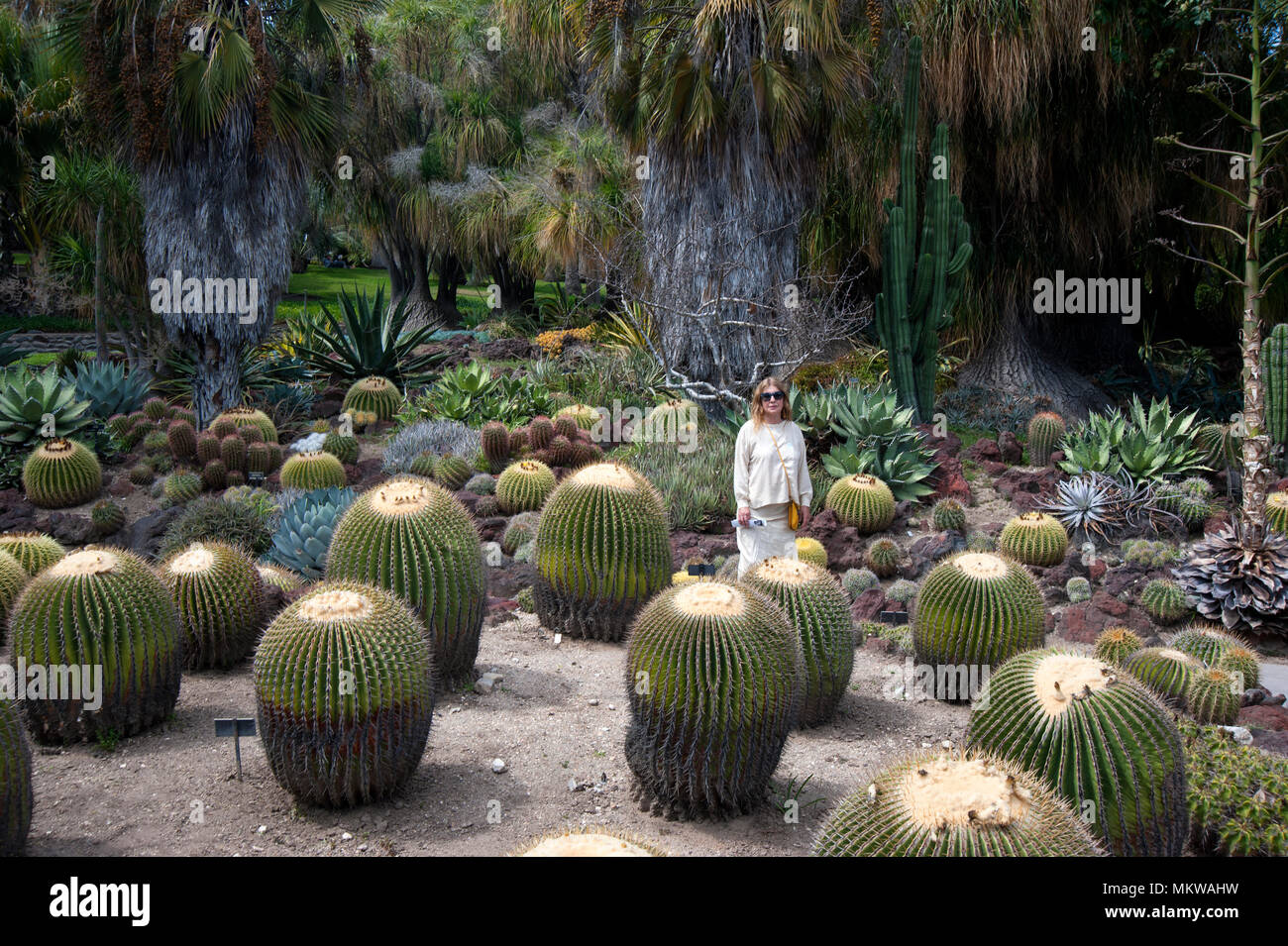 Visitor at the cactus garden in the Huntington Gardens at Pasadena, CA Stock Photo