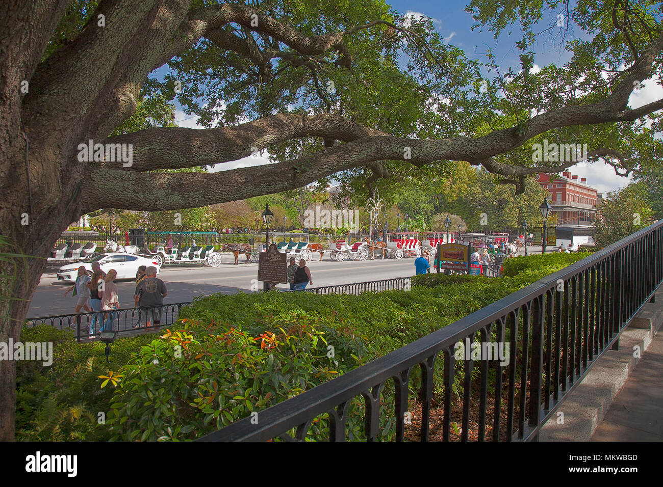 Aged oaks shade Decatur Street's walkways at the bottom of Jackson Square, New Orleans, Louisiana. - Stock Image