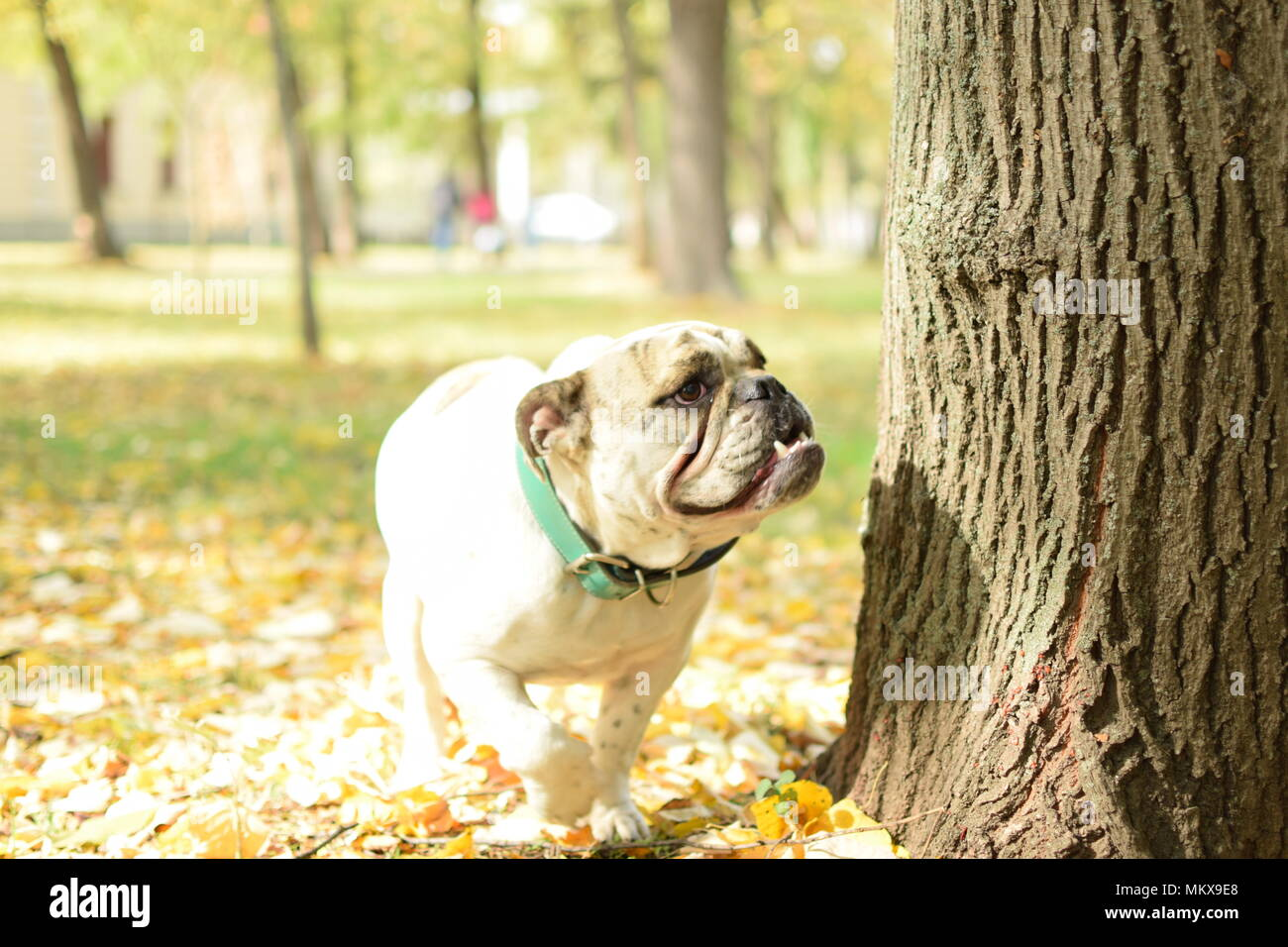 dog in nature - Stock Image