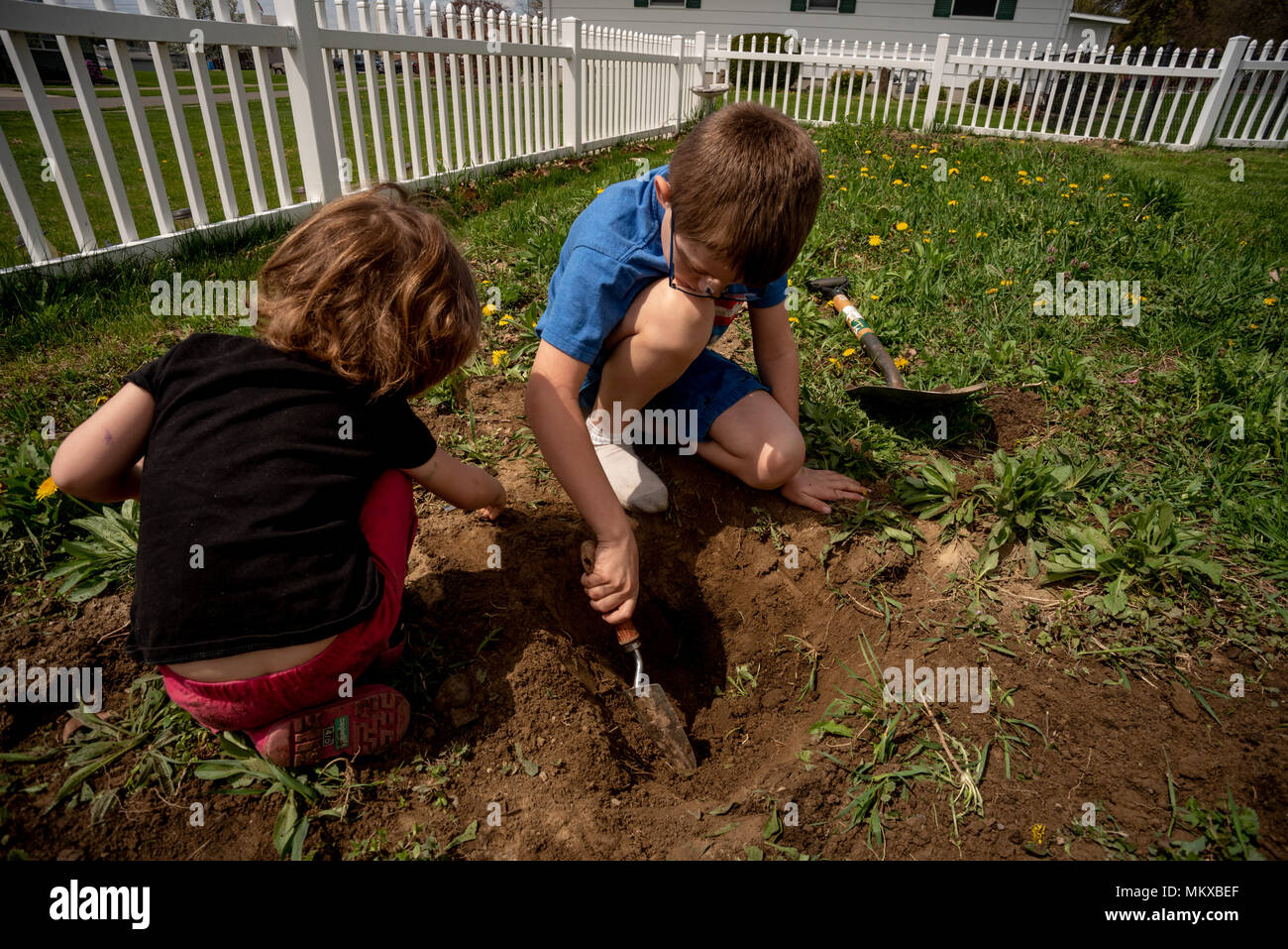 Two children dig in the dirt in a garden. - Stock Image