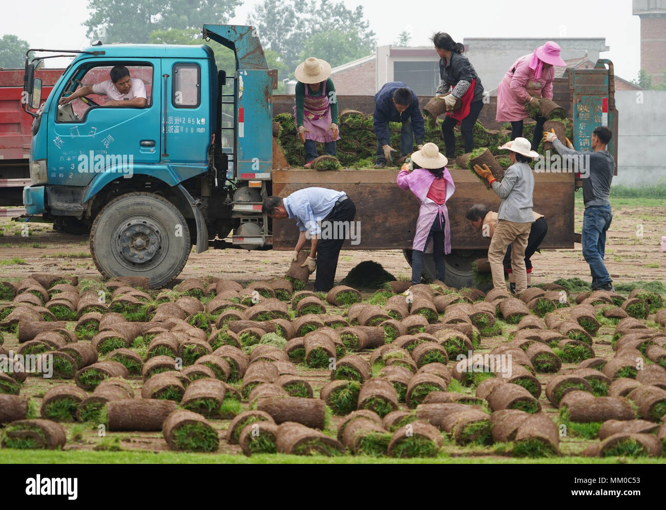 (180509) -- XI'AN, May 9, 2018 (Xinhua) -- Villagers load rolled-up turfs in Fujiang Village of Yinzhen Neighbourhood in Xi'an, northwest China's Shaanxi Province, May 9, 2018. The need for turfs during China's urbanization process has driven farmers in Yinzhen Neighbourhood to invest in the turf business. (Xinhua/Shao Rui) (lmm) - Stock Image