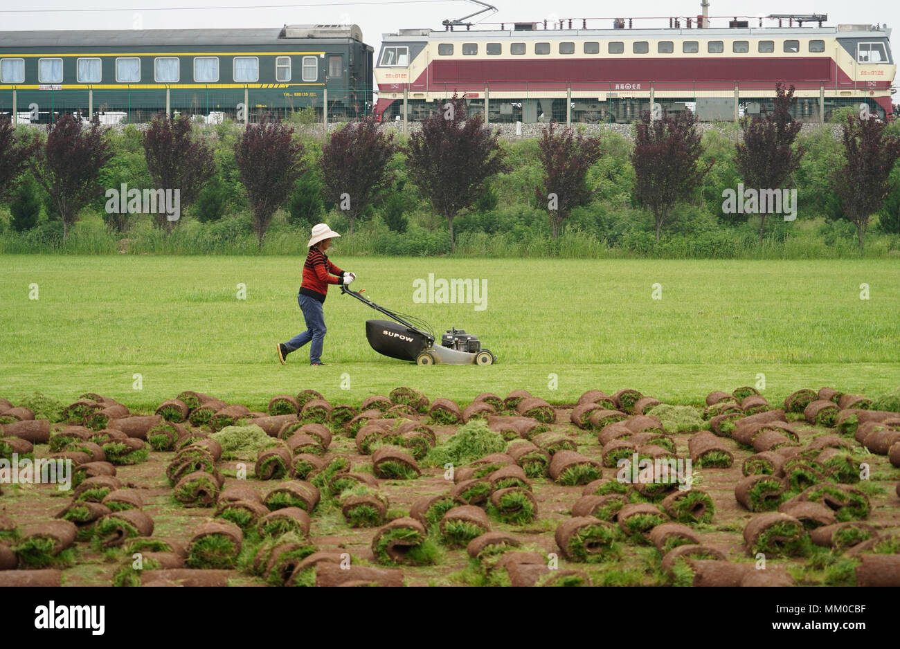 Xi'an, China's Shaanxi Province. 9th May, 2018. A villager trims a lawn from which commercial turfs are planted in Fujiang Village of Yinzhen Neighbourhood in Xi'an, northwest China's Shaanxi Province, May 9, 2018. The need for turfs during China's urbanization process has driven farmers in Yinzhen Neighbourhood to invest in the turf business. Credit: Shao Rui/Xinhua/Alamy Live News - Stock Image