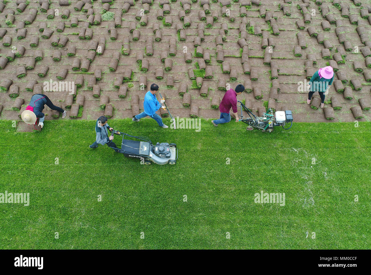 Xi'an. 9th May, 2018. In this aerial photo taken on May 9, 2018 shows villagers reap and roll up turfs in Fujiang Village of Yinzhen Neighbourhood in Xi'an, northwest China's Shaanxi Province. The need for turfs during China's urbanization process has driven farmers in Yinzhen Neighbourhood to invest in the turf business. Credit: Shao Rui/Xinhua/Alamy Live News - Stock Image
