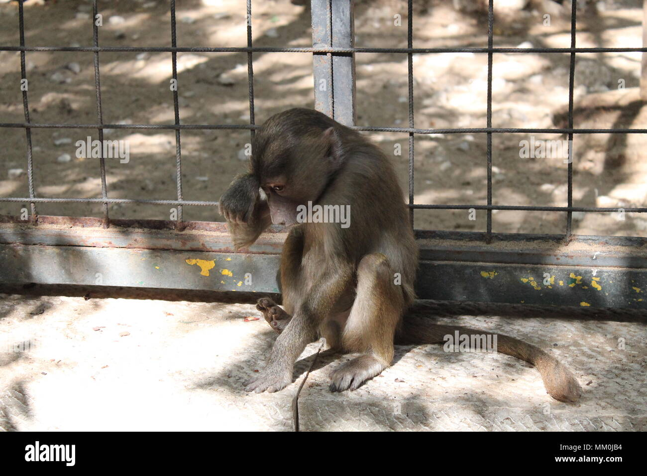 sad monkey Stock Photo