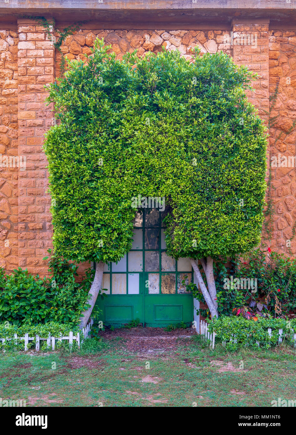 Orange colored bricks stone wall with grunge green metal grid door covered with arched tree, green grass, and plants at summer time, Montaza Public pa - Stock Image