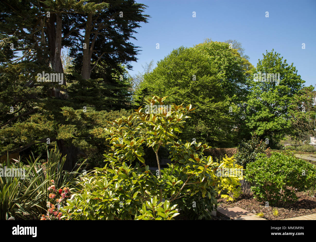 Mixed foliage in a garden with borrowed landscape, trees and greenery from beyond providing a backdrop to the view. - Stock Image