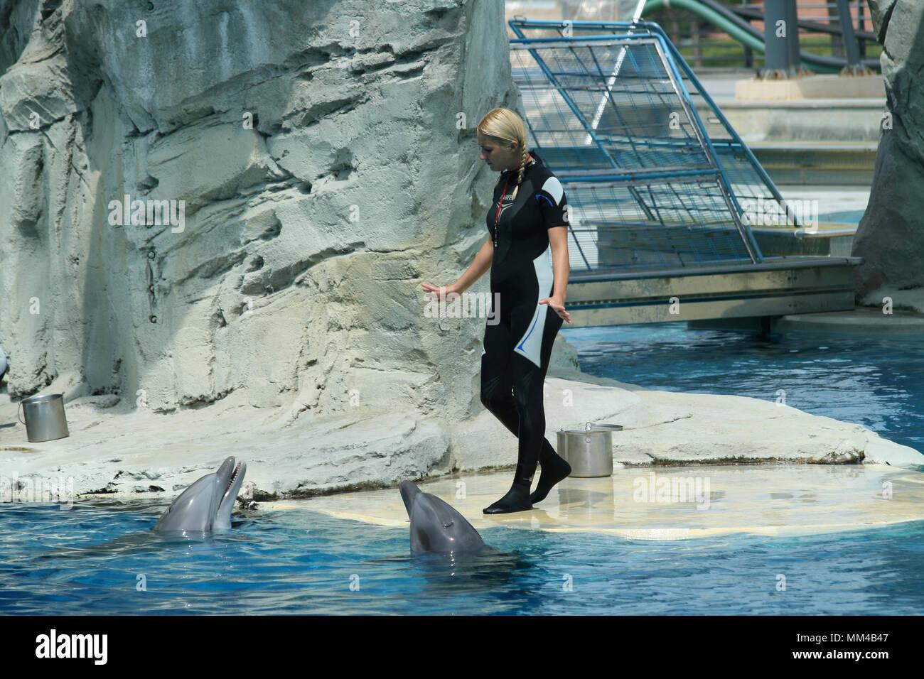 Riccione, Italy, 06 20 2015: dolphin trainers at work in the Oltremare aquarium in Riccione, Italy. Stock Photo