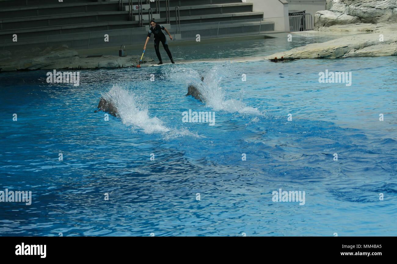 dolphins show at the riccione aquarium in italy Stock Photo