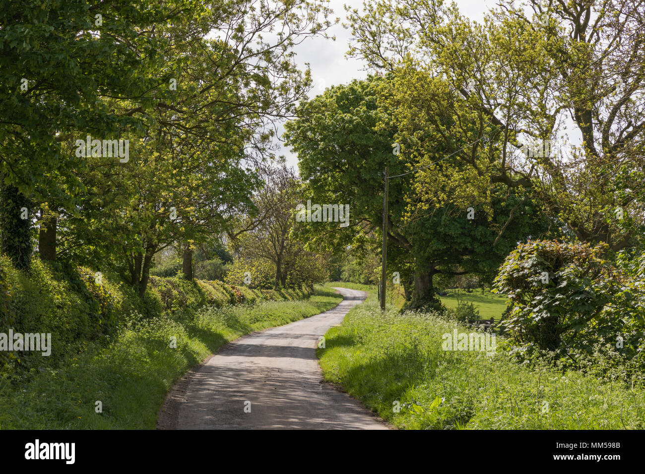 Rural Northamptonshire - a narrow country lane winds between wide, green verges, hedges and trees. The sun casts shadows on the lane. - Stock Image