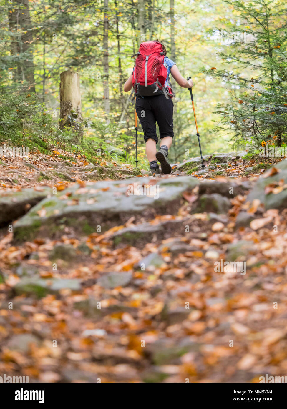 Woman on hiking tour in the Northern Black Forest, Bad Wildbad, Baden-Württemberg, Germany Stock Photo