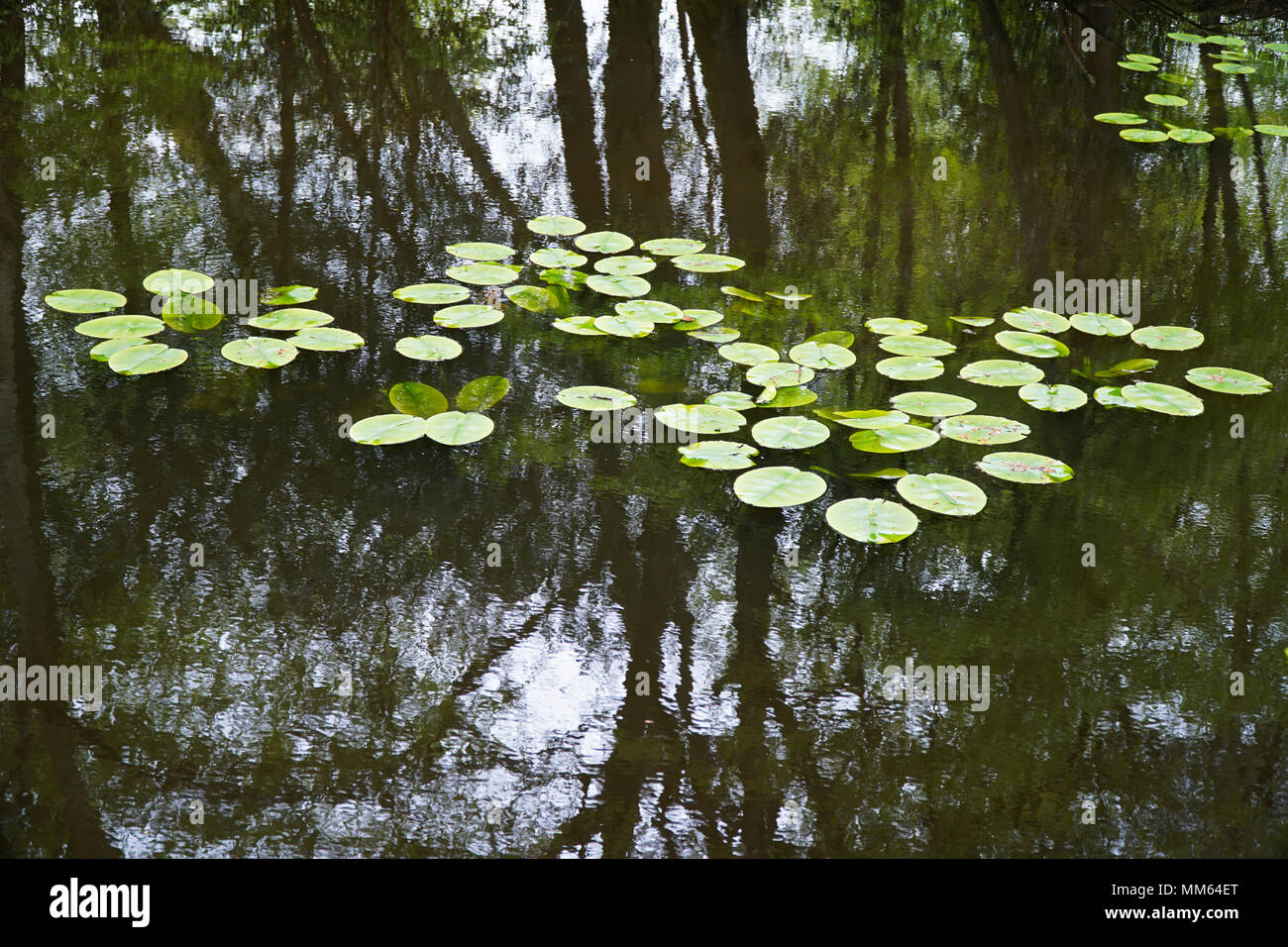 Calm Lake Water Reflections (Trees & Overcast Cloudy Sky) - 2 - Stock Image