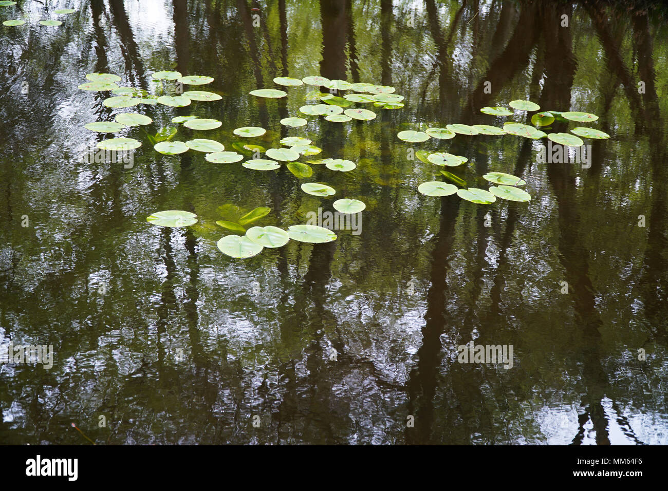Calm Lake Water Reflections (Trees & Overcast Cloudy Sky) - 1 - Stock Image